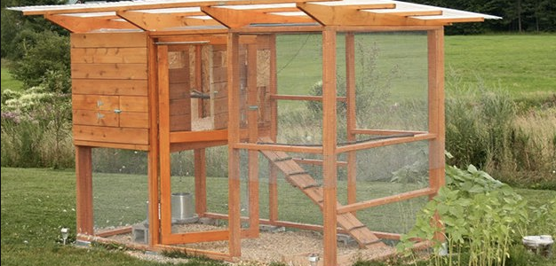 Attrayant Easy Steps To Building Your Chicken Coop