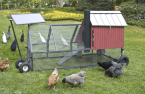 Portable Chicken Coop