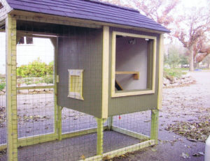 Building a Chicken Coop from Blueprints